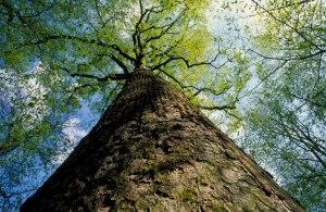 JK-view-up-tree